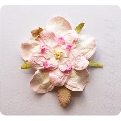 Гардения белая с розовым