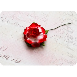 Красно-белая роза, 35 мм, 1шт